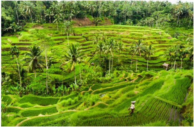 Bali also has plenty of lush landscapes
